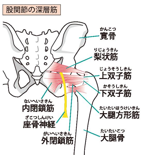 坐骨神経痛の治療が得意な上尾のふじの整骨鍼灸院